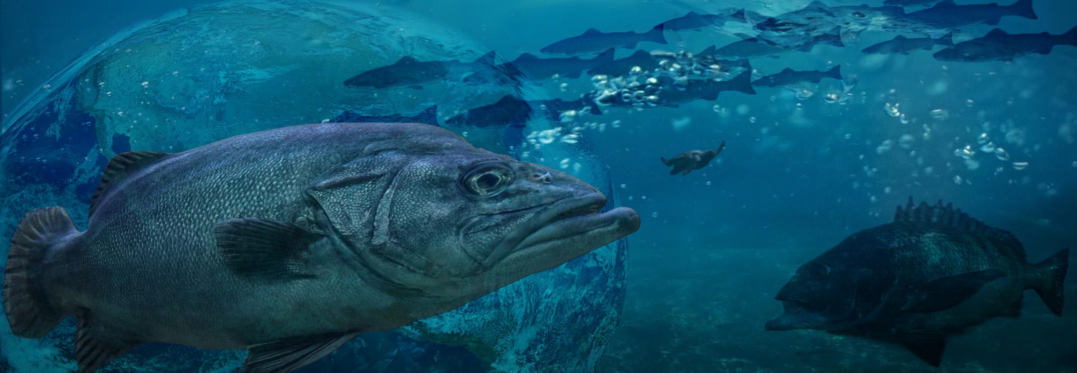波止釣りでおすすめの水中カメラ1選